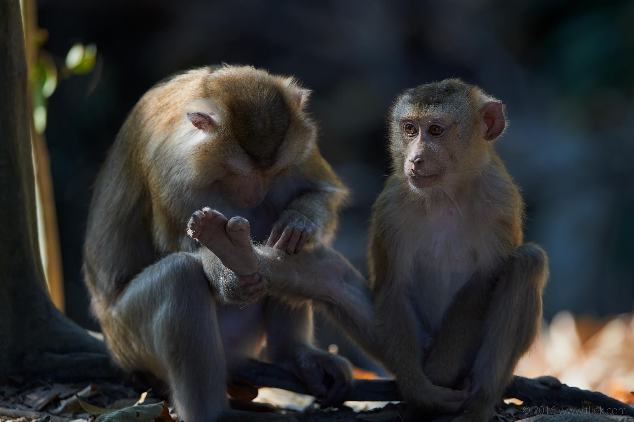 Khao Yai Macaque Nikon 600mm FL f4