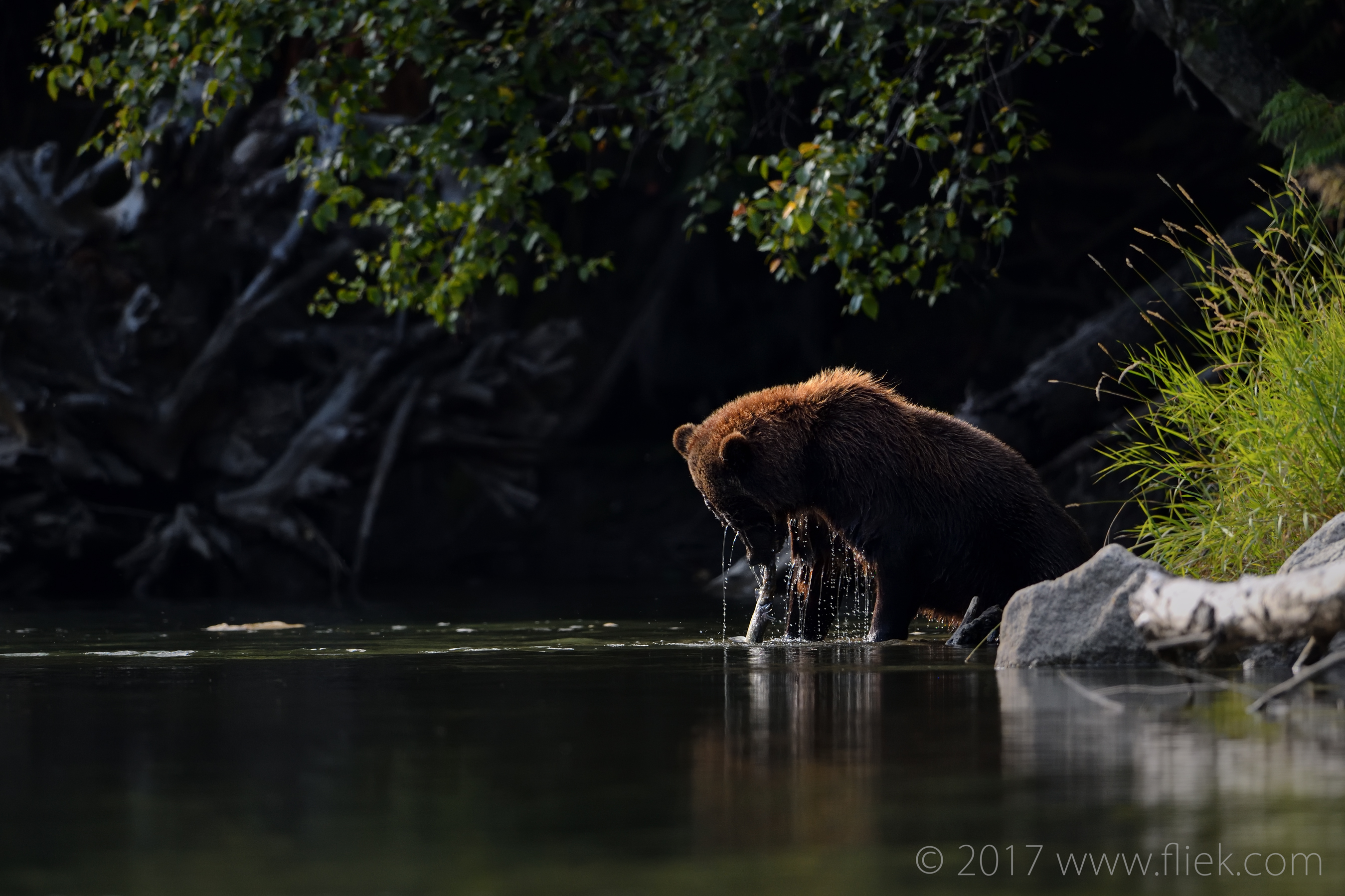 Nikon D850 review part 1: first impressions from the Great Bear Rain Forest