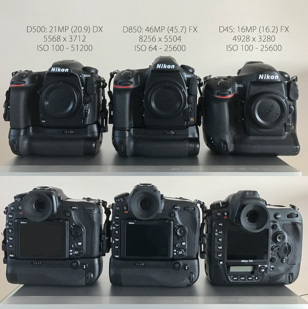 Nikon D850 vs  D500 vs  D4S: which one? | Life/Nature