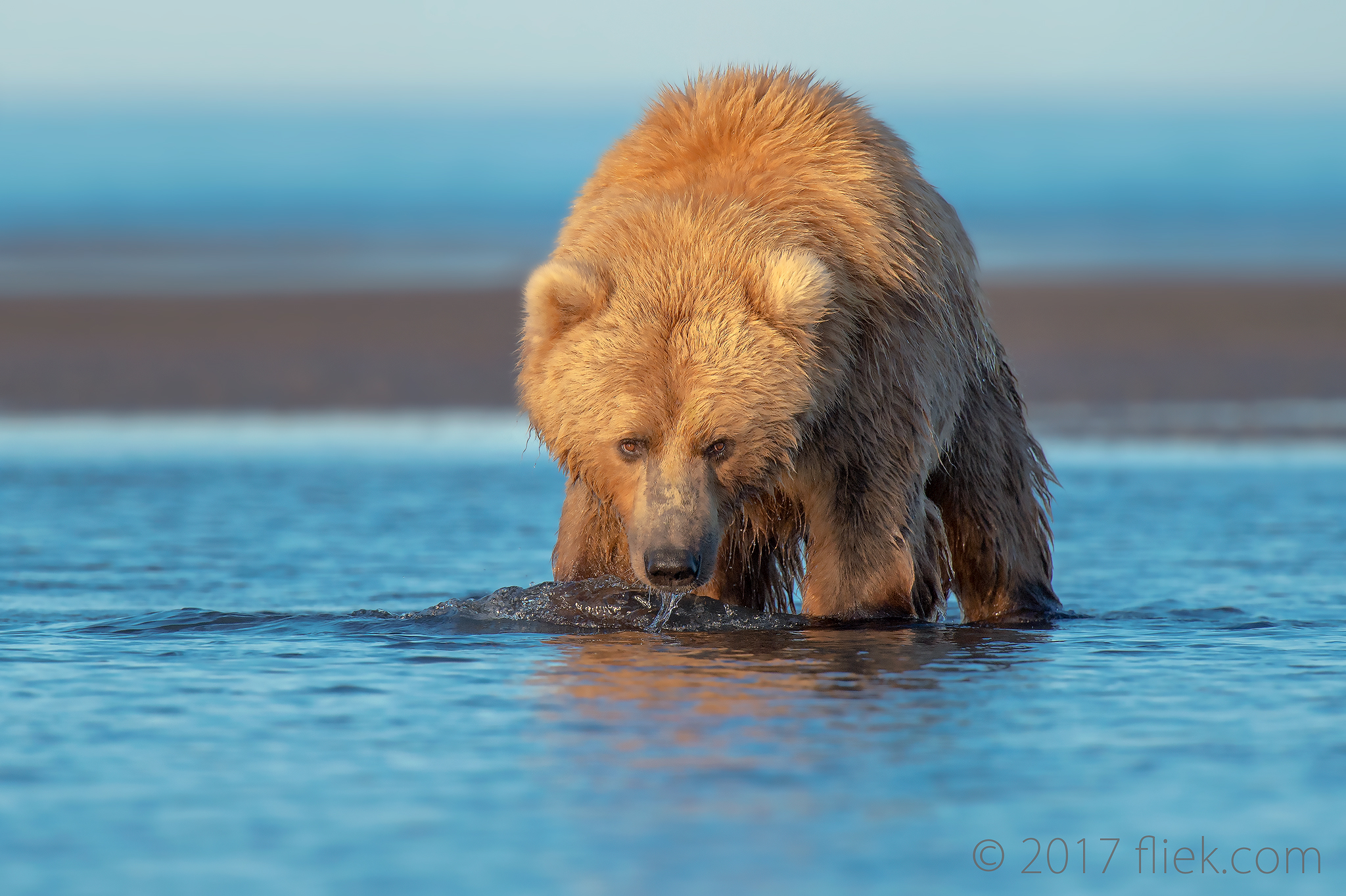 Back to Alaska: 1st set/1st post