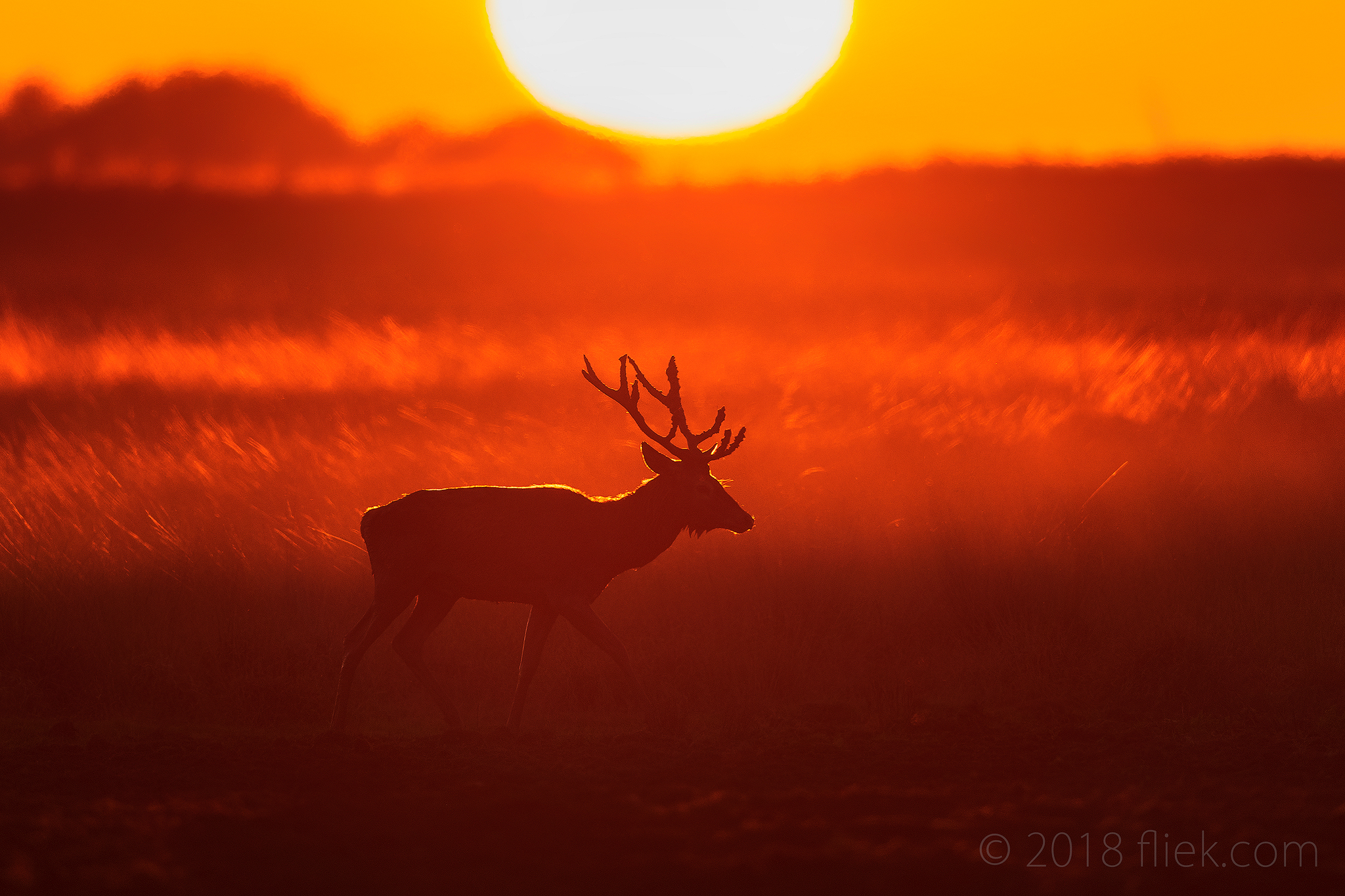 Red Deer II, and the 'Luck Factor' in Photography
