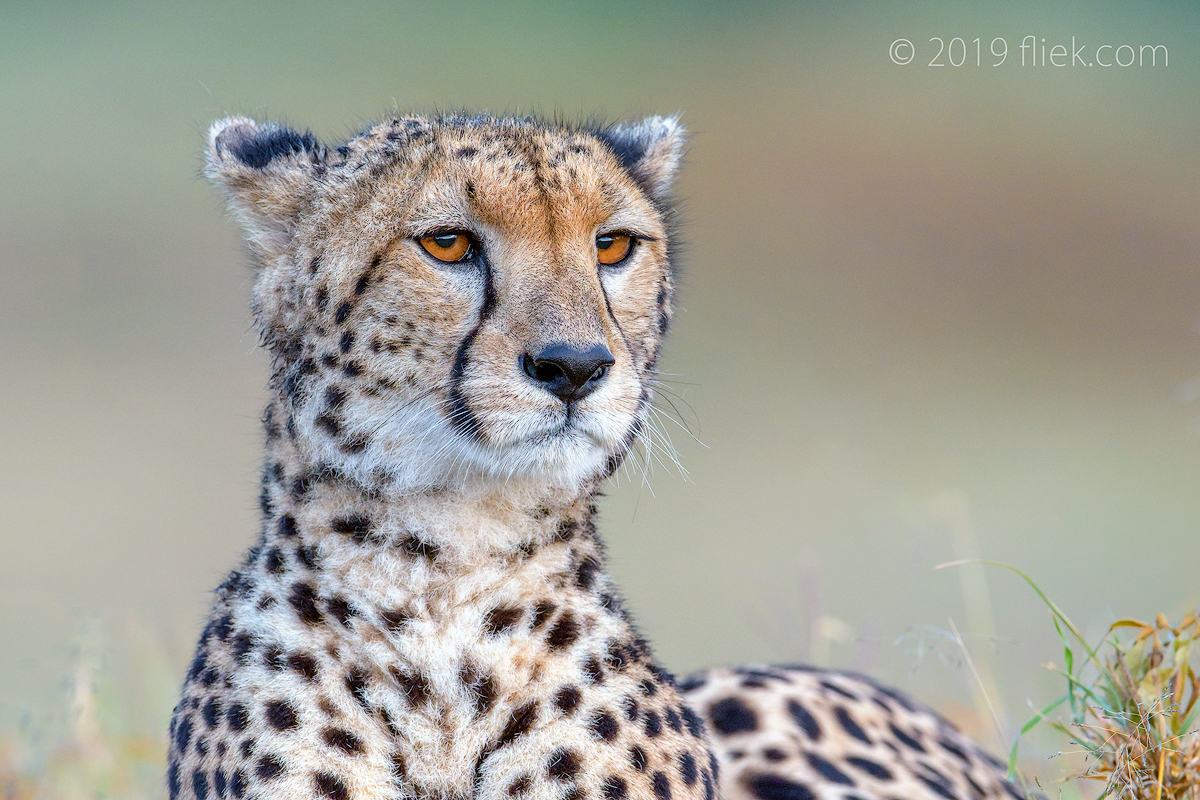 Mara land… is Cheetah land (part 3)