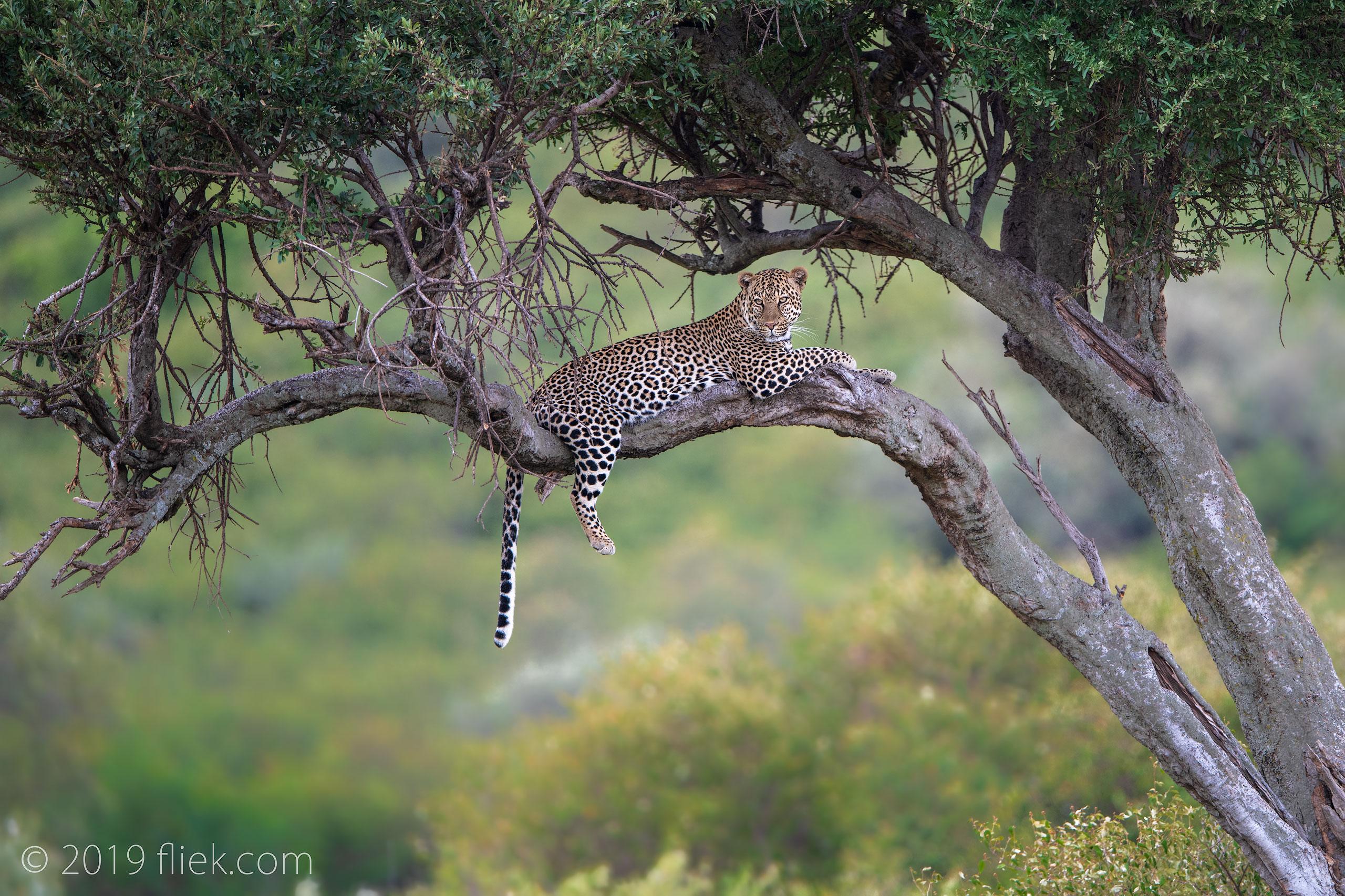 Masai Mara: the Journey Begins
